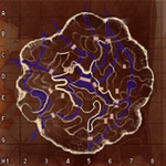 20130617_map02.jpg